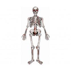 Декорація Скелет 135*42см фетр 11289 Godan