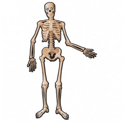 Декорация на стену Скелет 134см