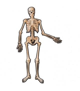 Декорація на стіну Скелет 134 см